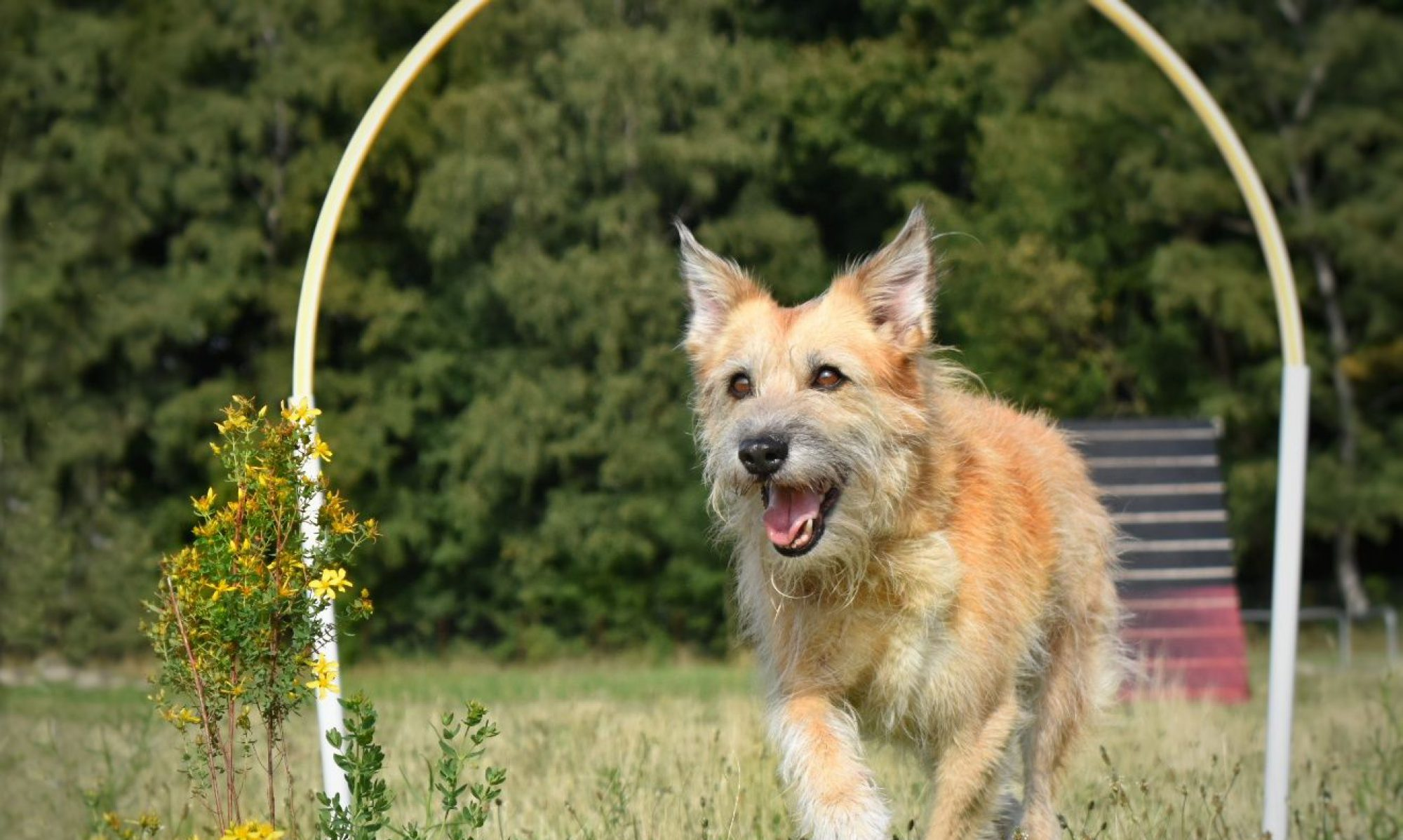 Hundeschule Findeklee